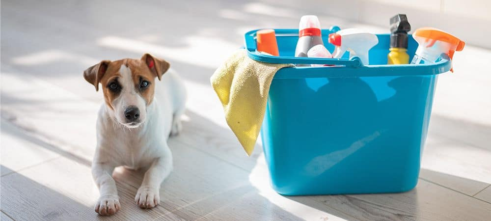 DIY Pet-Friendly Natural Home Cleaning Products